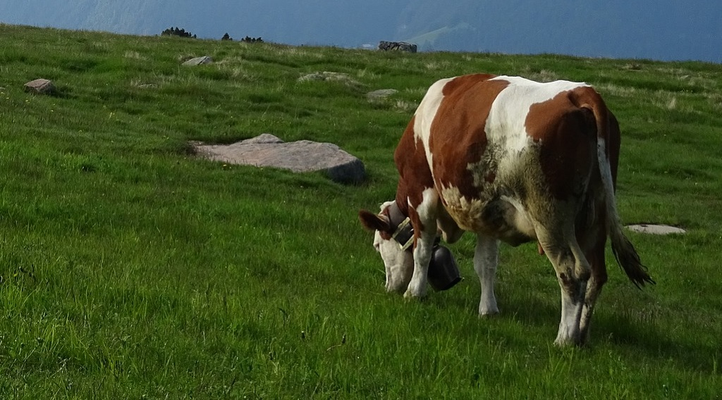 Organic Grass Fed Beef (Cattle) Explained: Pasture Raised Foods
